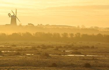 Dawn over grazing marshes at Burnham Norton, Holkham National Nature Reserve, looking towards Burnham Overy mill, Norfolk, UK, March 2009  -  Chris Gomersall/ npl