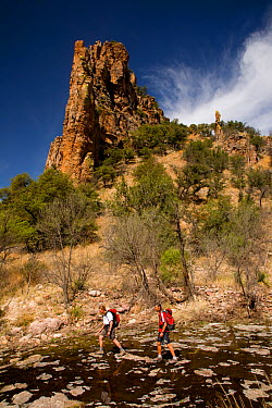 Two hikers walking down the creek running through Sycamore Canyon part of Coronado National Forest Arizona, USA, March 2009, model released  -  Kirkendall-spring/ npl