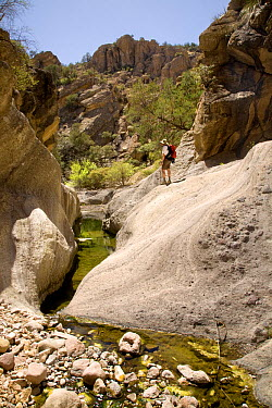 Hiker walking in Sycamore Canyon part of Pajarita Wilderness of Coronado National Forest Arizona, USA, March 2009  -  Kirkendall-spring/ npl