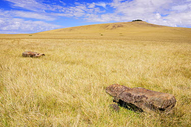 Fallen Moai statues on grassland below Maunga Puka Tikei volcano summit, Poike peninsula, Easter Island, Pacific ocean, November 2004  -  Oriol Alamany/ npl