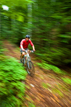 Man riding his mountain bike through woodland at Moose Brook State Park in Gorham, New Hampshire, USA, August 2008 Model released  -  Jerry Monkman/ npl