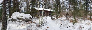 Sigurd Olsen's cabin in birch woodland (Betula papyrifera) in snow, Burntside Lake, Minnesota, USA, March 2008  -  Neil Lucas/ npl