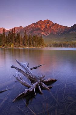 Pyramid Lake and Mountain at dawn, Jasper National Park, Alberta, Canada September 2009  -  David Noton/ npl