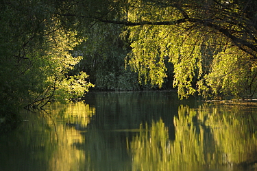 Danube Delta with trees reflected in water, Romania, May 2009  -  WWE/ Presti/ npl