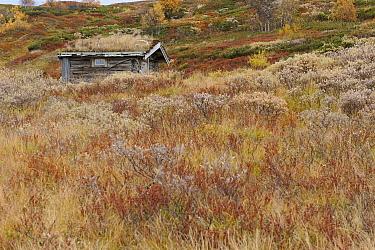forollhogna national park, norway, september  -  WWE/ Munier/ npl