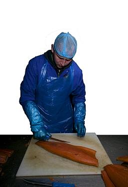 Preparing farmed salmon (Salmo salar) prior to smoking Connections to the Severn Estuary and traditional salmon fishing Wye and Severn Smokery, Gloucestershire, England, UK April 2010  -  David Woodfall/ npl
