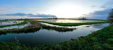 Panoramic view of flooded Tadham Moor, Somerset Levels, near Wedmore, Somerset, winter, UK, 2009  -  John Waters/ npl