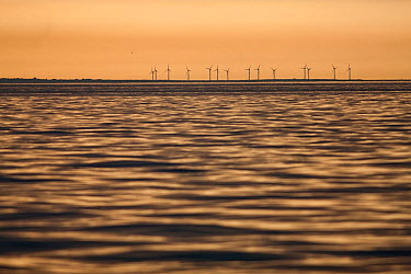 Wind turbines near Kilmore Quay viewed from boat at dawn Co Wexford, Republic of Ireland, Europe  -  Guy Edwardes/ npl