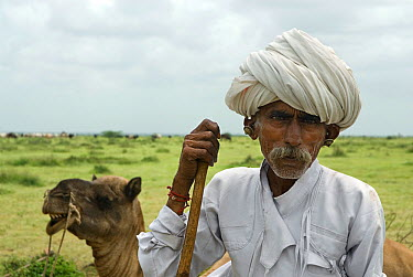 Rabari sheep herder with his camel, Kutch, Gujarat, India, August 2009  -  Ashish & Shanthi Chandola/ npl