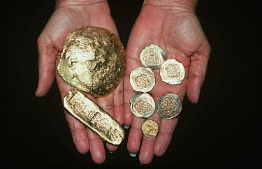Gold Doubloons and gold bar recovered from the shipwreck Las Maravillas, a Spanish galleon sunk in 1658, Bahamas 1987 model released  -  Jeff Rotman/ npl
