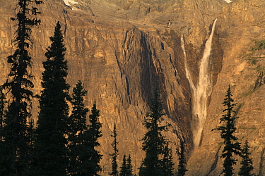 View to Helmet Falls through forest of Engelmann spruce (Picea engelmannii) and Subalpine fir (Abies lasiocarpa) in early morning light, Kootenay National Park, British Columbia, Canada World Heritage...  -  Alan Watson/ npl