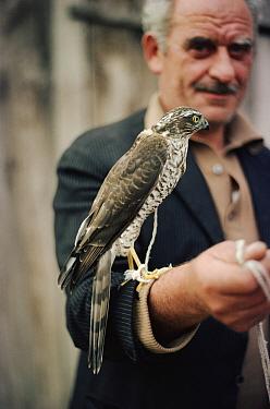 Turkish falconer with captive sparrow hawk, Turkey 1976  -  Richard Porter/ npl