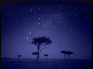 The Southern Cross star constellation shining above Ballenites trees in Masai Mara, Kenya Starlight image intensifier camera image taken with no artificial light  -  Martin Dohrn/ npl