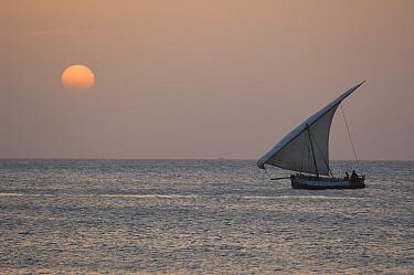 Seascape with Dhow at sunset, Stone Town, Zanzibar, Tanzania  -  Bernard Castelein/ npl