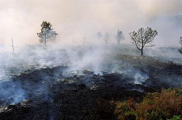 Heath fire Corfe Mullen, Dorset  -  Graham Hatherley/ npl