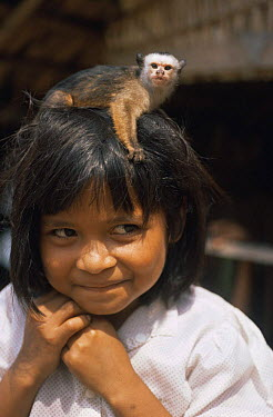 Satare indian girl with tame Satare maues marmoset (Callithrix mauesi satare) on her head, Amazonia, Brazil  -  Nick Gordon/ npl