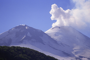 Smoke billowing out from Llaima volcano, Conguillo NP, South Chile, South America  -  Rhonda Klevansky/ npl