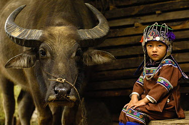 Hani child in traditional costume sitting beside domesticated water buffalo used for ploughing the rice paddies Hani Ethnic minority people Yuanyang, Honghe Prefecture, Yunnan Province, China 2006  -  Pete Oxford/ npl