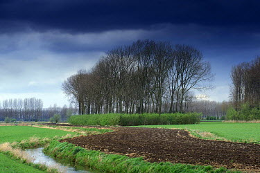 Small-scale woodlands interspersed among fields, making good wildlife habitats Flanders, Belgium  -  Philippe Clement/ npl