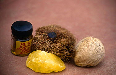 Musk deer products (Moschus sp) from left to right back: Perfume, real musk pod, fake pod; front: articifial musk, India  -  Vivek Menon/ npl