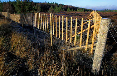 Deer fence fitted with markers to reduce Capercaillie collisions Scotland, UK  -  Pete Cairns/ npl