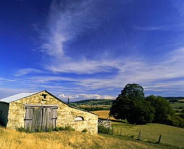 Derelict farm building in Cotswold landscape, Winchcombe, Gloucestershire, UK 2003  -  Nick Turner/ npl
