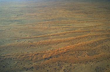 Aerial view of dunes in Strzelecki Desert, South Australia  -  Angelo Gandolfi/ npl