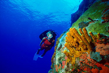 Diver at Diamond Rock, Saba, Caribbean Volcanic basalt rocks are encrusted with sponges  -  Doug Perrine/ npl