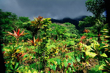 Montreal gardens with storm clouds above, St Vincent, Caribbean  -  Doug Perrine/ npl