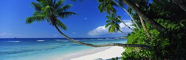 Anse Severe, La Digue, Seychelles  -  David Noton/ npl