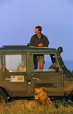 Presenter Jonathan Scott with African lion (Panthera leo) from Marsh Pride, Masai Mara NR, Kenya 1999 BBC Big Cat Diary series  -  Angela Scott/ npl