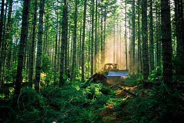 Logging in Suislaw National Forest, Oregon, USA  -  Lynn M. Stone/ npl