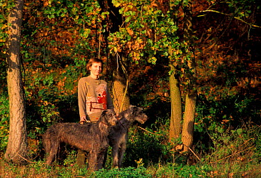 Woman with two Deerhounds on lead in woodland, Italy  -  Adriano Bacchella/ npl