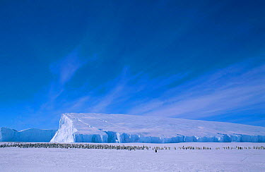Iceberg with Emperor penguin colony Cape Darnley Antarctica  -  Pete Oxford/ npl