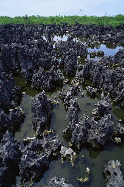Jagged black limestone formations, 'Hell', Grand Cayman, Cayman Islands, Caribbean,  -  Doug Perrine/ npl