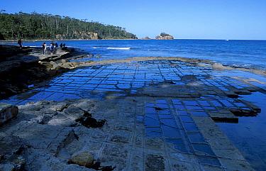Tourists viewing Tessellated pavements, Tasman peninsula, Tasmania, Australia January 2002  -  Martin Gabriel/ npl