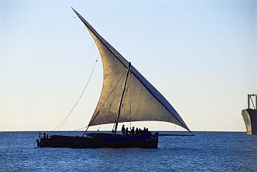 Traditional fishing dhow in full sail off Zanzibar Island, Tanzania, Africa  -  Pete Oxford/ npl