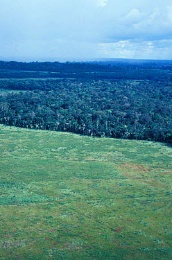 Forest cleared for cattle grazing, Rondia, Brazil  -  Nick Gordon/ npl