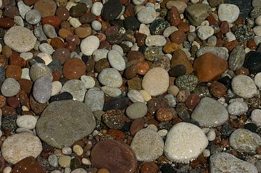 Pepples on beach, Stora Karls Island, Gotland, Sweden  -  Staffan Widstrand/ npl