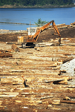 Wood processing industry, Vancouver Island, British Columbia, Canada  -  Jurgen Freund/ npl