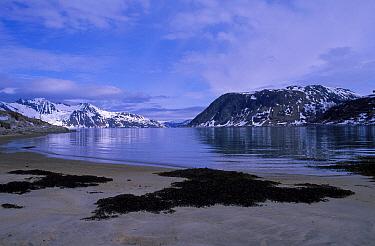 Funk Island Newfoundland Canada  -  Mark Yates/ npl
