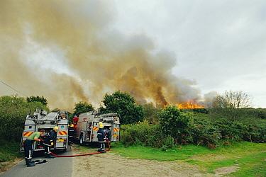 Fire engines attending heath land fire, Westleton, Suffolk, U  -  David Tipling/ npl