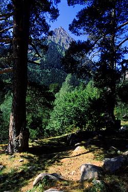 Aigues Tortes-St, Mauricio NP, Pyrenees, Spain, Europe  -  Jose B. Ruiz/ npl