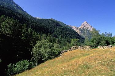 Aigues Tortes St Mauricio NP, Pyrenees, Spain Pyrenees  -  Jose B. Ruiz/ npl
