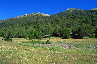 Aigues Tortes, St Mauricio National Park, grassland meadow and coniferous woodlands, Pyrenees, Spain  -  Jose B. Ruiz/ npl