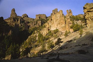 Patagonian cypress forest (Austrocedrus chilensis) Valle Encantado, Patagonia,Argentina  -  Daniel Gomez/ npl
