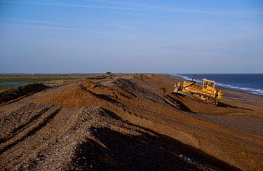 Bulldozer constructing sea defence with shingle Cley Norfolk UK  -  Martin H Smith/ npl