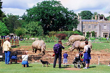 People watching White rhinos at Cotswold Country Park, Burford, Glos, UK  -  Andrew Harrington/ npl