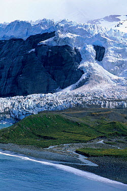 Glacier and king penguin colony (Aptenodytes patagoni), Gold Harbour, South Georgia  -  Hanne & Jens Eriksen/ npl