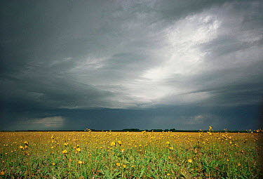 Storm brewing over Peace-Athabasca river Delta, Wood Buffalo NP, Alberta, Canada  -  Jeff Turner/ npl